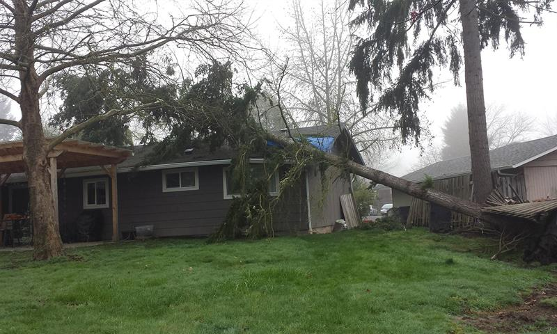 Storm Damage Photos