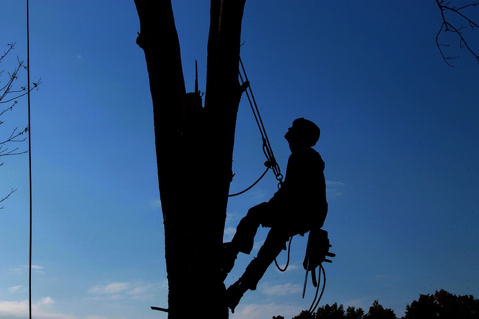 Tree Removal Beaverton Professional at Work